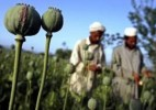 10 Interesting Opium Facts