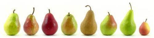 Pear Colors