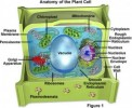 10 Interesting Plant Cell Facts