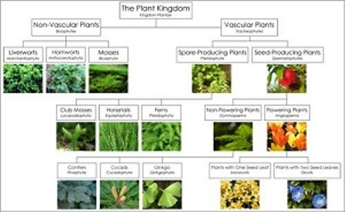 Plantae Kingdom Picture