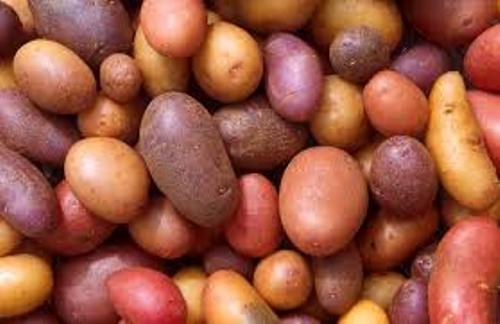 Potato Pictures