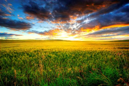 Prairie Images
