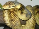 10 Interesting Python Facts