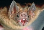 10 Interesting Rabies Facts