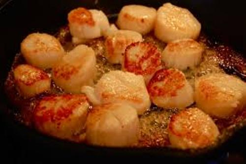 Scallop Facts