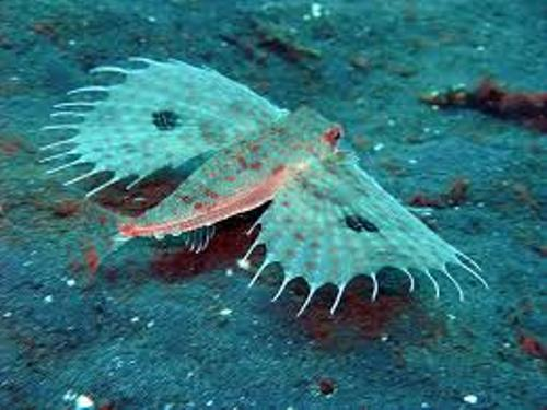 Facts about Sea Creature