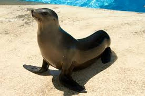 Facts about Sea Lion