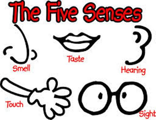 Facts about Senses