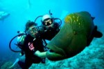 8 Interesting Scuba Diving Facts