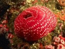 10 Interesting Sea Anemone Facts