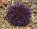 10 Interesting Sea Urchin Facts