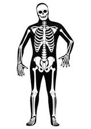 Facts about Skeleton