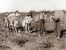 10 Interesting Slavery in America Facts