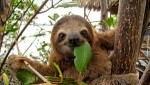 10 Interesting Sloth Facts
