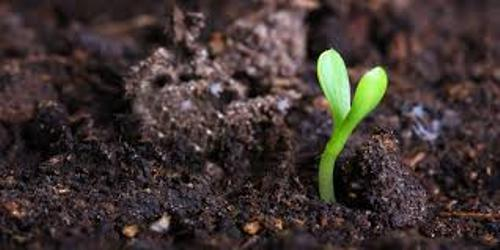 Soil and Plants