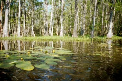 10 Interesting Swamp Facts My Interesting Facts
