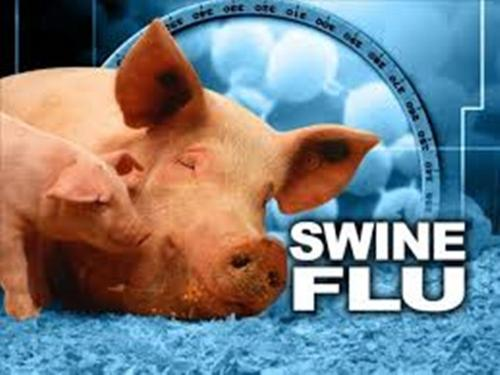 Swine Flu Facts