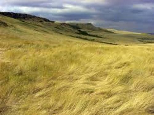 Temperate Grassland Facts
