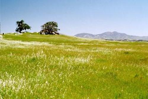 Temperate Grasslands Image