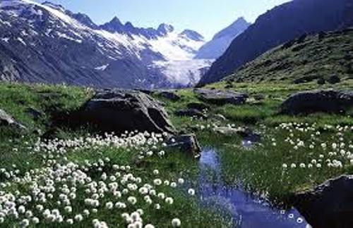The Alpine Tundra Pic