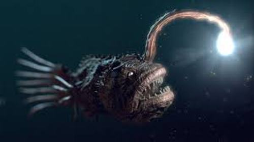 The Angler Fish Image
