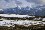 10 Interesting the Arctic Tundra Facts