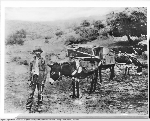 The California Gold Rush Image