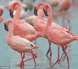10 Interesting the Color Pink Facts