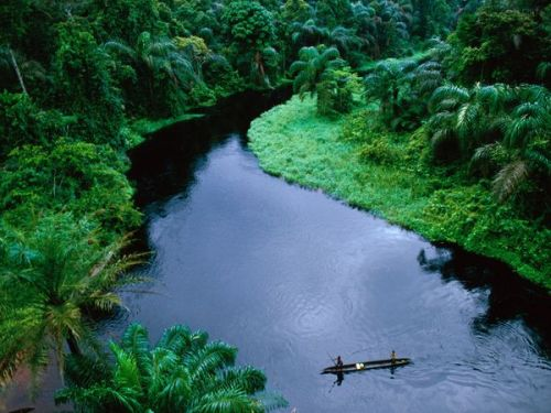 The Congo Rainforest Image