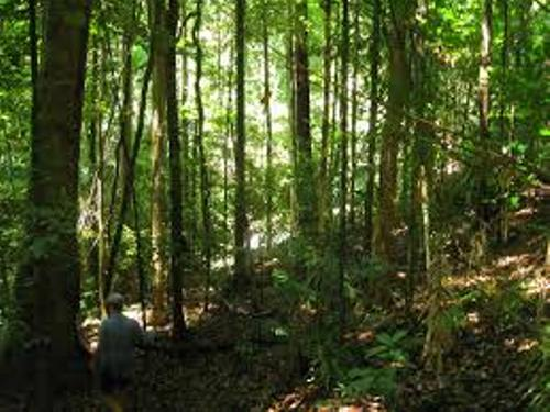 The Daintree Rainforest Images