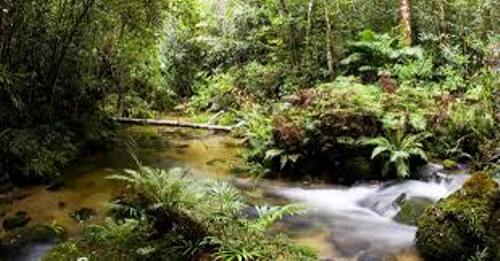 The Daintree Rainforest Pictures