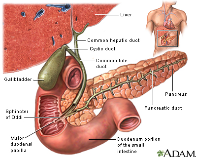 Facts about Gallbladder