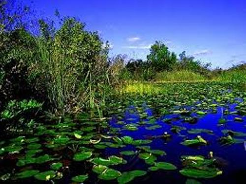 Florida Everglades Facts