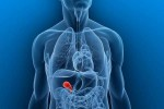 10 Interesting the Gallbladder Facts