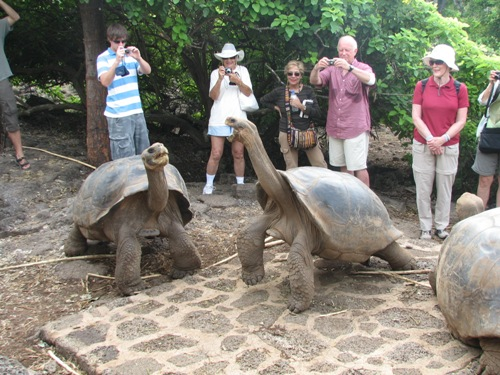 The Galapagos Tortoise Pictures