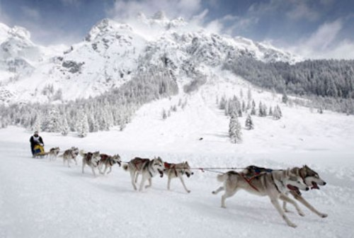 The Iditarod Race Image