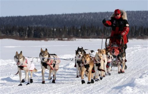 The Iditarod Race Pictures
