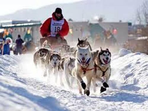 The Iditarod Race