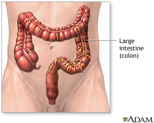 Large Intestine Pic
