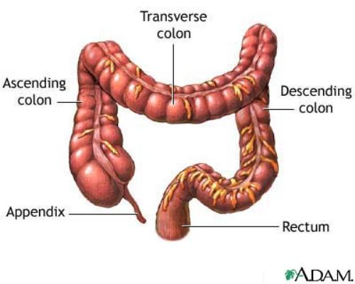 Large Intestine Pictures