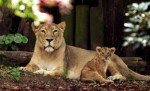 10 Interesting London Zoo Facts