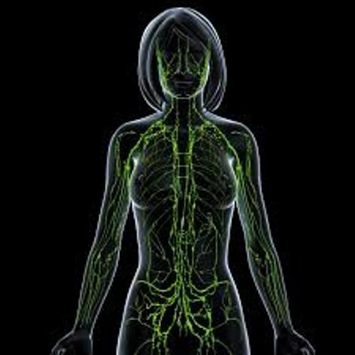 The Lymphatic System Pictures