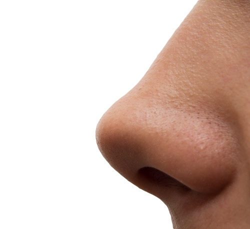 facts about nose