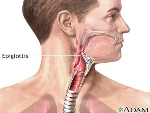 the oesophagus images