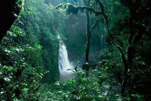 10 Interesting The Rainforest Biome Facts My Interesting