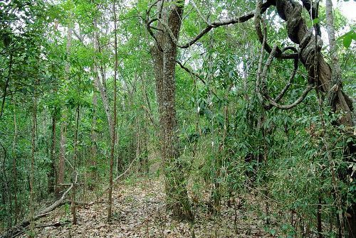 the tropical dry forest facts