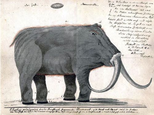 Woolly Mammoth Facts