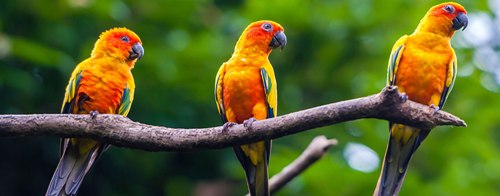 10 Interesting Zoology Facts