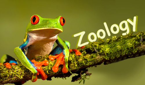 10 interesting zoology facts my interesting facts for Soil zoology